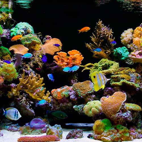 Agua salada peces corales invertebrados y accesorios for Accesorios para acuarios marinos