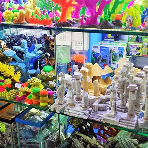 Agua dulce peces invertebrados y accesorios fauna acuario for Peces de agua dulce para peceras