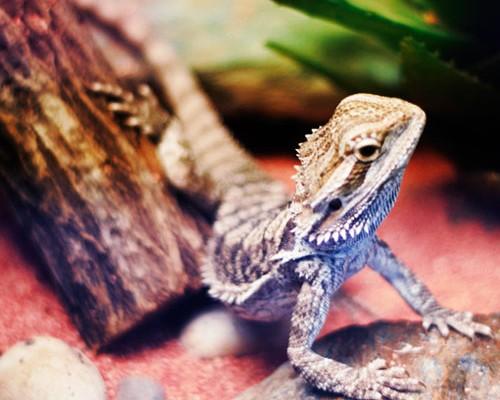 reptiles-2